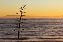 Силуэт дерева на ландшафте захода солнца океана Стоковое Изображение