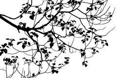 Силуэт дерева на белой предпосылке Стоковое Изображение