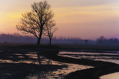 Силуэт дерева на времени простоя Стоковая Фотография