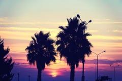 Силуэт дерева на заходе солнца рая Стоковое Изображение