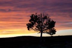 Силуэт дерева на заходе солнца. Стоковое Изображение