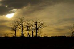 Силуэт дерева на заходе солнца Стоковые Изображения