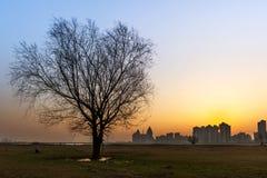 Силуэт дерева на заходе солнца Стоковая Фотография