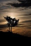 Силуэт дерева на заходе солнца Стоковые Фотографии RF