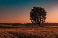 Силуэт дерева на поле осени Стоковое фото RF