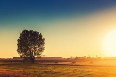 Силуэт дерева на поле осени Стоковые Фото