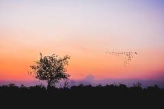 Силуэт дерева на поле риса с горным видом Стоковое фото RF
