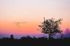 Силуэт дерева на поле риса с горным видом Стоковая Фотография