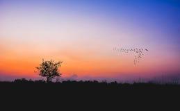 Силуэт дерева на поле риса с горным видом Стоковые Фотографии RF