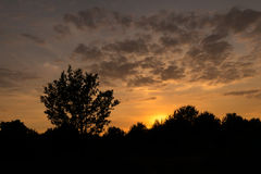 Силуэт дерева под cloudscape захода солнца Стоковое Фото