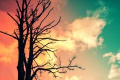 Силуэт дерева против неба захода солнца Стоковые Фотографии RF