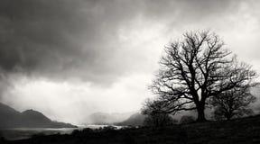 Силуэт дерева, район озера, Англия Стоковая Фотография