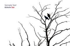 Силуэт дерева с вороной Стоковые Фотографии RF
