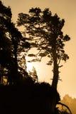 Силуэт дерева с золотым светом Стоковые Фотографии RF