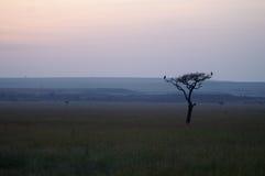 Силуэт дерева с 2 птицами Стоковое Фото