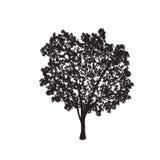 Силуэт дерева фикуса с листьями иллюстрация вектора