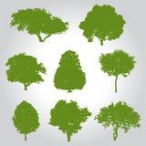 Силуэт деревьев Стоковые Изображения RF
