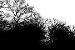 Силуэт деревьев Стоковое фото RF