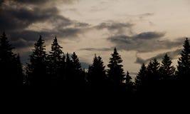 Силуэт леса Стоковые Фото