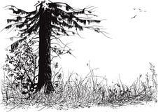 Силуэт леса Стоковое Изображение RF