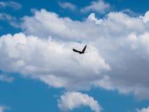 Силуэт летания птицы смуглого орла в голубом небе с белым cl Стоковое Изображение