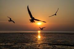 Силуэт летания птицы Стоковые Фотографии RF