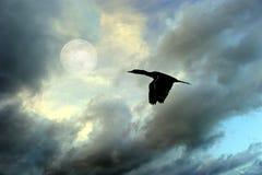 Силуэт летания птицы Стоковая Фотография RF