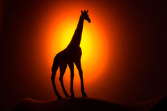 Силуэт жирафа на восходе солнца Стоковое Изображение