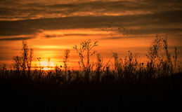 Силуэт завода в природе Стоковая Фотография RF