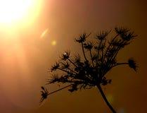 Силуэт завода в солнце Стоковое Изображение