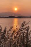 Силуэт завода, горы, океана и солнца на заходе солнца Стоковое Фото