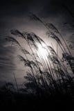 Силуэт завода захода солнца Стоковая Фотография RF