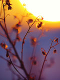 Силуэт завода зимы на заходе солнца Стоковые Изображения RF