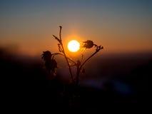 Силуэт завода на заходе солнца Стоковые Изображения RF