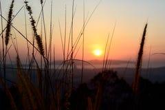 Силуэт завода одичалой травы и засорителя во время захода солнца Стоковая Фотография RF