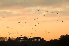 Силуэт захода солнца с летящими птицами в Риме стоковое фото rf