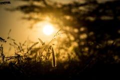 Силуэт захода солнца травянистый мечт стоковые фото