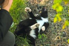 Силуэт игр девушки с ее котом Стоковые Фото