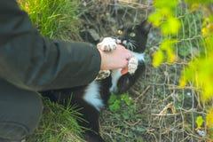 Силуэт игр девушки с ее котом Стоковая Фотография RF