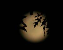 Силуэт листвы в свете луны Стоковое Изображение