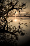 Силуэт и отражение дерева рекой на заходе солнца стоковое изображение
