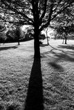Силуэт и тень дерева в черно-белом Стоковая Фотография RF