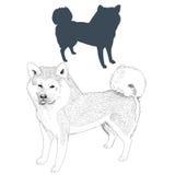 Силуэт и эскиз собаки Акиты Inu Стоковое фото RF