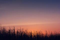 Силуэт и twilight абстрактное небо Стоковые Фото