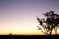 Силуэт кенгуру на заходе солнца Стоковое фото RF