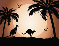 Силуэт кенгуру на заходе солнца иллюстрация штока