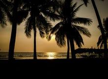 Силуэт кокосовой пальмы на праздниках пляжа Стоковое Изображение
