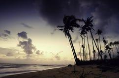Силуэт кокосовой пальмы на пляже желтый цвет на облаках неба, мягких и драматических Стоковые Изображения RF
