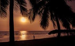 Силуэт кокосовой пальмы на пляже самостоятельно Стоковое Изображение RF