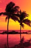 Силуэт кокосовой пальмы на пляже Стоковая Фотография